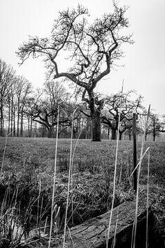 De boomgaard van Ubo Pakes