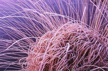 Strabrechtse Heide 168 sur Desh amer
