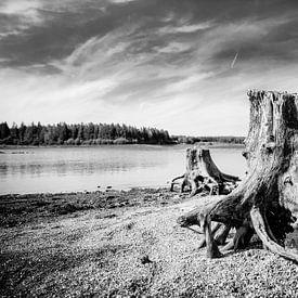 Boomstronken aan een verlaten meer. van Wim Demortier