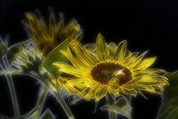 Sonnenblumenkunst van
