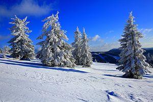 Arbres à neige en Forêt-Noire sur Patrick Lohmüller