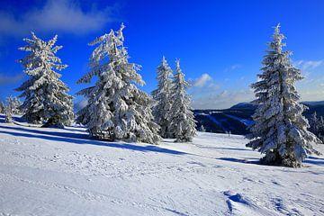 Sneeuwbomen in het Zwarte Woud van Patrick Lohmüller