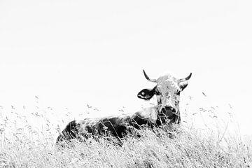 Kuh im Gras von Lana Goris