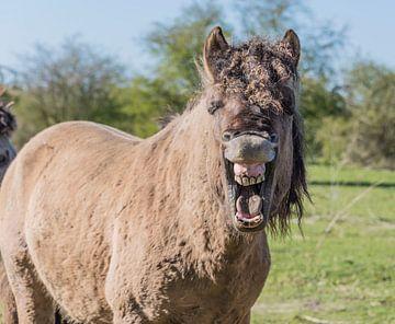 Konikpaard is blij van Ans Bastiaanssen