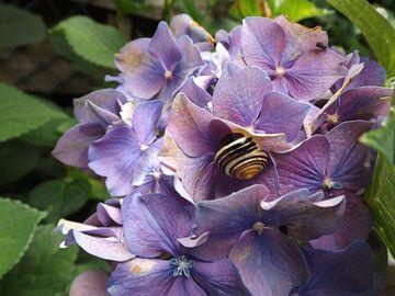 Slak met bloem van G.m. Seuren