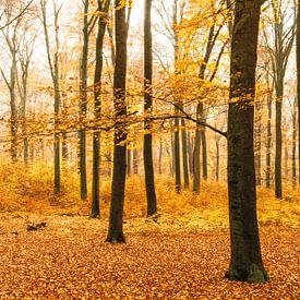 La forêt d'orangers sur Albert Lamme