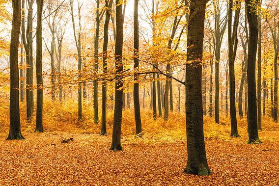 Het oranje bos