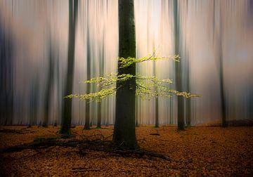 Herfst van Jeroen Mondria