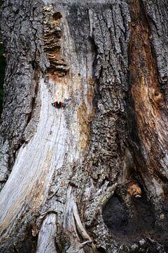 Schmetterling auf Baumstamm mit Pilzen von FotoGraaG Hanneke