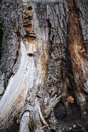 Vlinder op boomstronk met zwammen