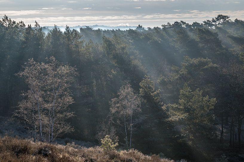 Ein strahlender Sonnenaufgang auf der Heide von John van de Gazelle