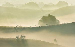Mist landschap van