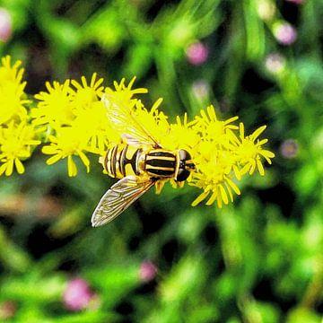 Bezige zweefvlieg (syrphidae) van Lavieren Photography