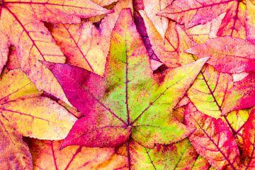 Stapel kleurrijke bladeren in herfst  van Ben Schonewille