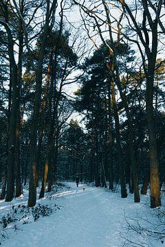 Frozen Morning van Kim van der Weerden