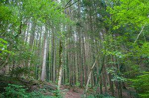 Bos in duitsland van