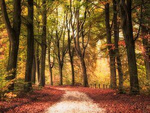Een kleurrijke bos pad in de herfst van
