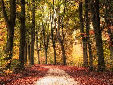 Een kleurrijke bos pad in de herfst van Fabrizio Micciche