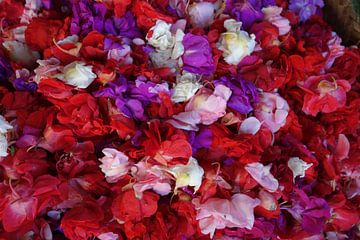 Bloemen von Mari Plooij
