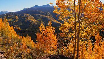 Gouden Herfst - Colorado   van