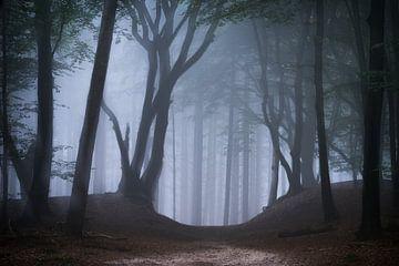 Träumer Vergnügen von Tvurk Photography