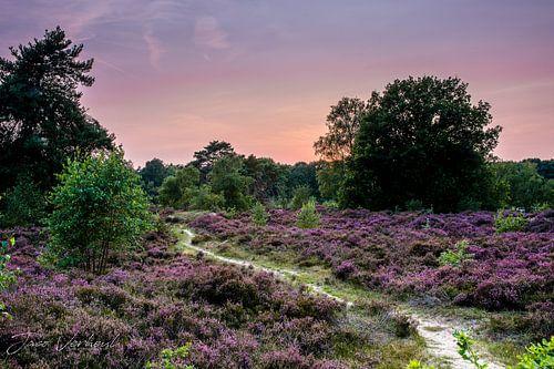 The color purple van Jaco Verheul