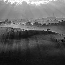 Zwart wit panorama thee plantage van Ellis Peeters