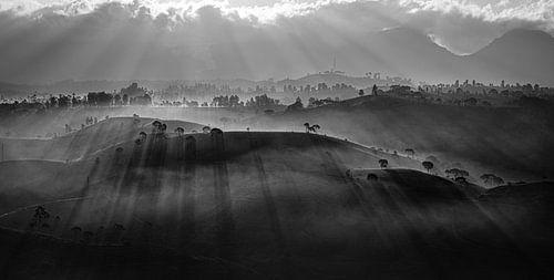 Zwart wit panorama thee plantage