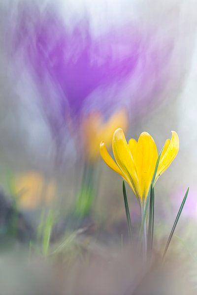 Finally Spring van Bob Daalder