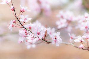 Zachte pasteltinten in het voorjaar van Margreet Piek