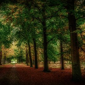 donker bos in de herfst van eric van der eijk