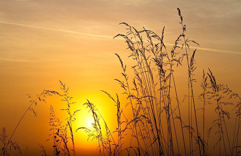 Gräser am Morgen van Bernhard Kaiser