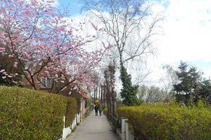 Frühlingsanfang van