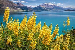 Gelbe Lupinen am Lake Wakatipu, Neuseeland