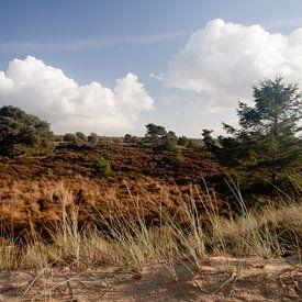 Heideveld in Nationaal Park Drents-Friese Wold bij Appelscha van Meindert van Dijk