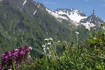 Zwitserse Alpenweide von Kim Koppenol