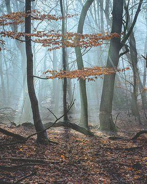 Morgenlicht von Sonny Vermeer