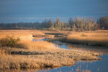 Eine warme Winterlandschaft von Koen Hoekemeijer