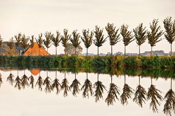 Bomen langs ringvaart van polder van Frans Lemmens