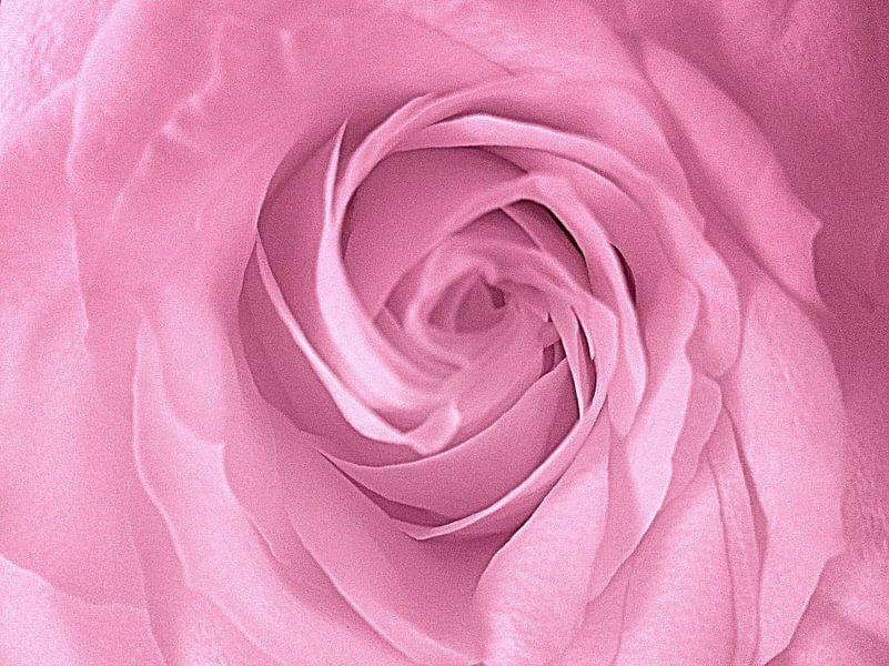 Heart of a Pink Rose van Nicky`s Prints