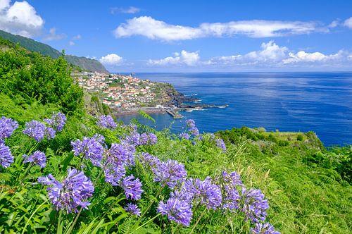 Lelie van de Nijl bloeit Madeira tijdens een mooie zomerdag