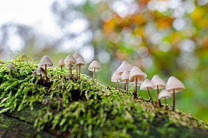Champignons sur la mousse en automne sur Bastiaan Buurman