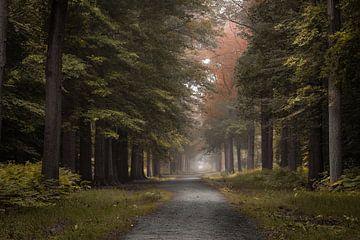 De weg in het Liesbos van Jos Erkamp