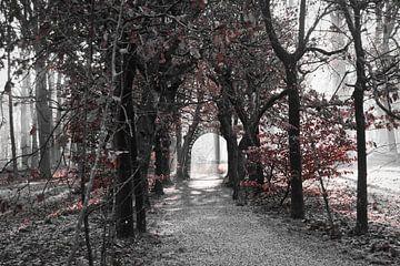Der Buchenstollen im Baarner Wald von Micha Papenhuijzen