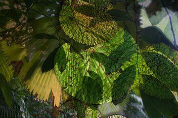 Bladeren, natuur van Alexandra Verkerk