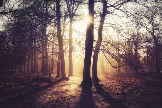 Sunrise in foggy forest van Joost Lagerweij