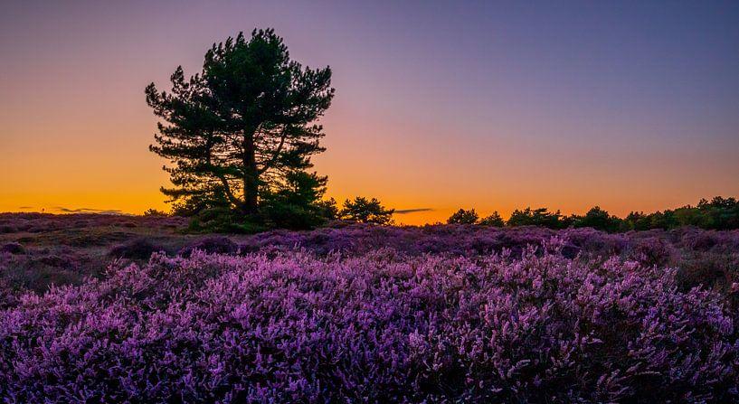 Heide bij Bergen 3 van Peter Heins