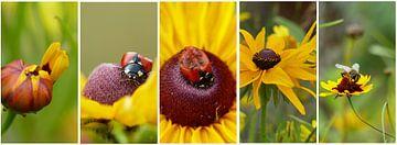 Collage van gele bloemen met lieveheersbeestje en bijtje von Gonnie van Hove