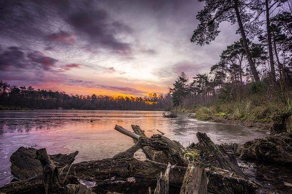 Seterse bossen in Dorst van Ronald Westerbeek