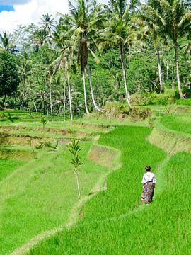 De Rijstvelden bij Kunung Kawi van Petra Brouwer